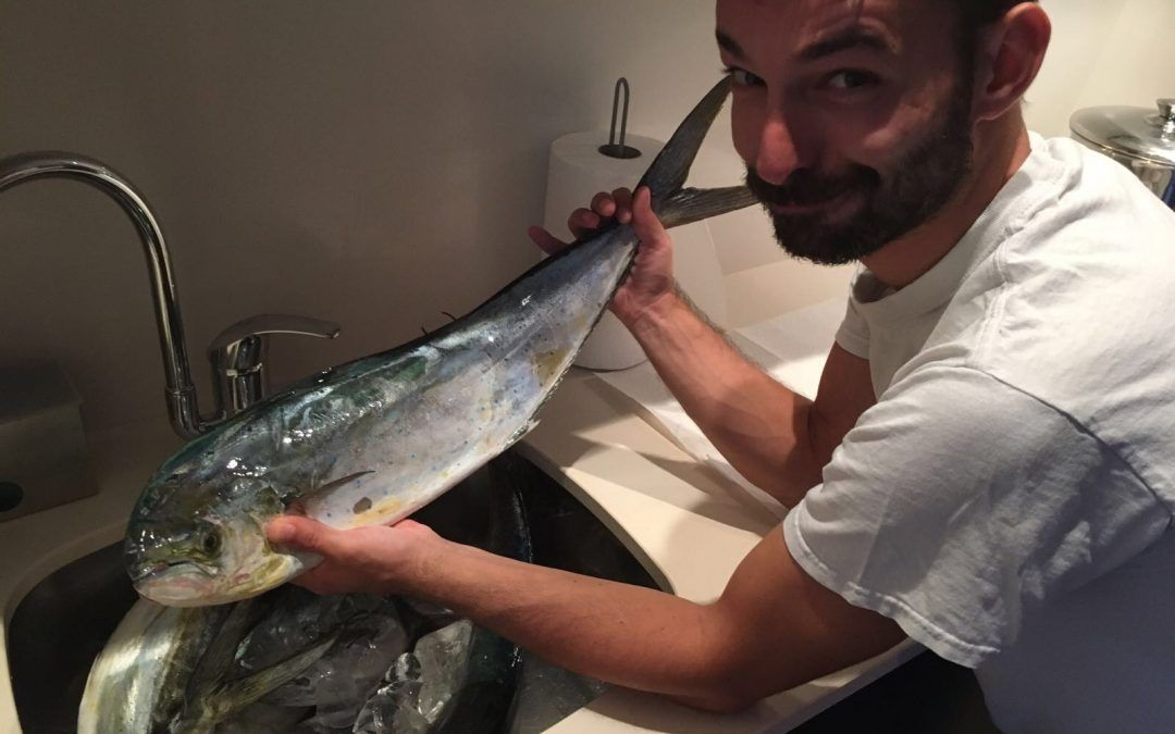 The wonders of Dorado or Mahi-Mahi